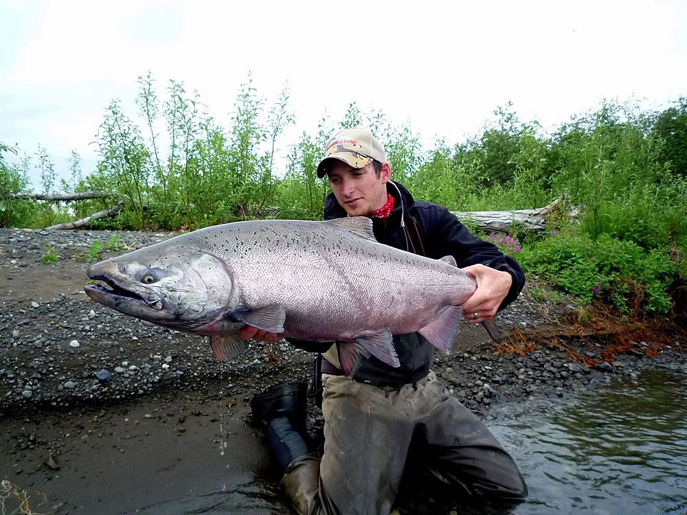 Alaska fishing guides bristol bay salmon fishing for Alaskan salmon fishing
