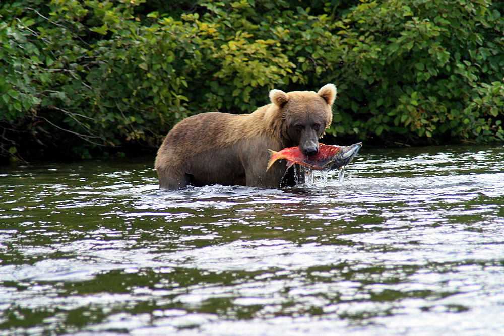 Best alaska fishing packages our specials for Best alaska fishing packages