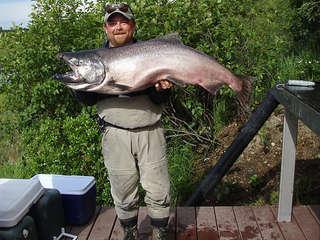 king_salmon_005
