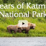 The Bears of Katmai National Park