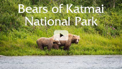 The Bears of Katmai National Park