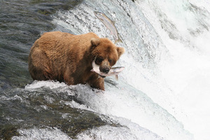 Alaska Wildlife Photos