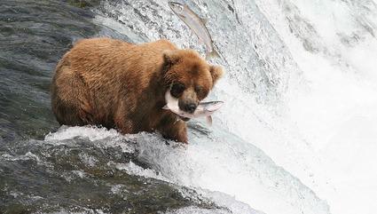 Alaska Wildlife Photos
